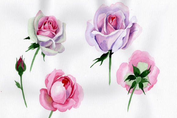 Pink rose watercolor flower png graphic by mystocks creative fabrica pink rose watercolor flower png mightylinksfo