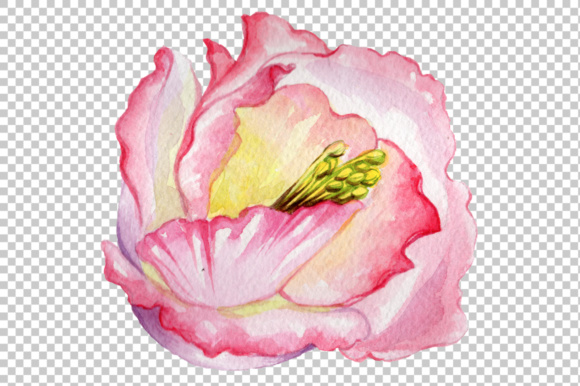 Pink Watercolor Rose Flower Png Graphic By Mystocks Creative Fabrica