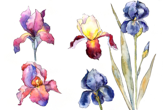 Print on Demand: Purple and Yellow Irises Flowers Watercolor Set Graphic Illustrations By MyStocks