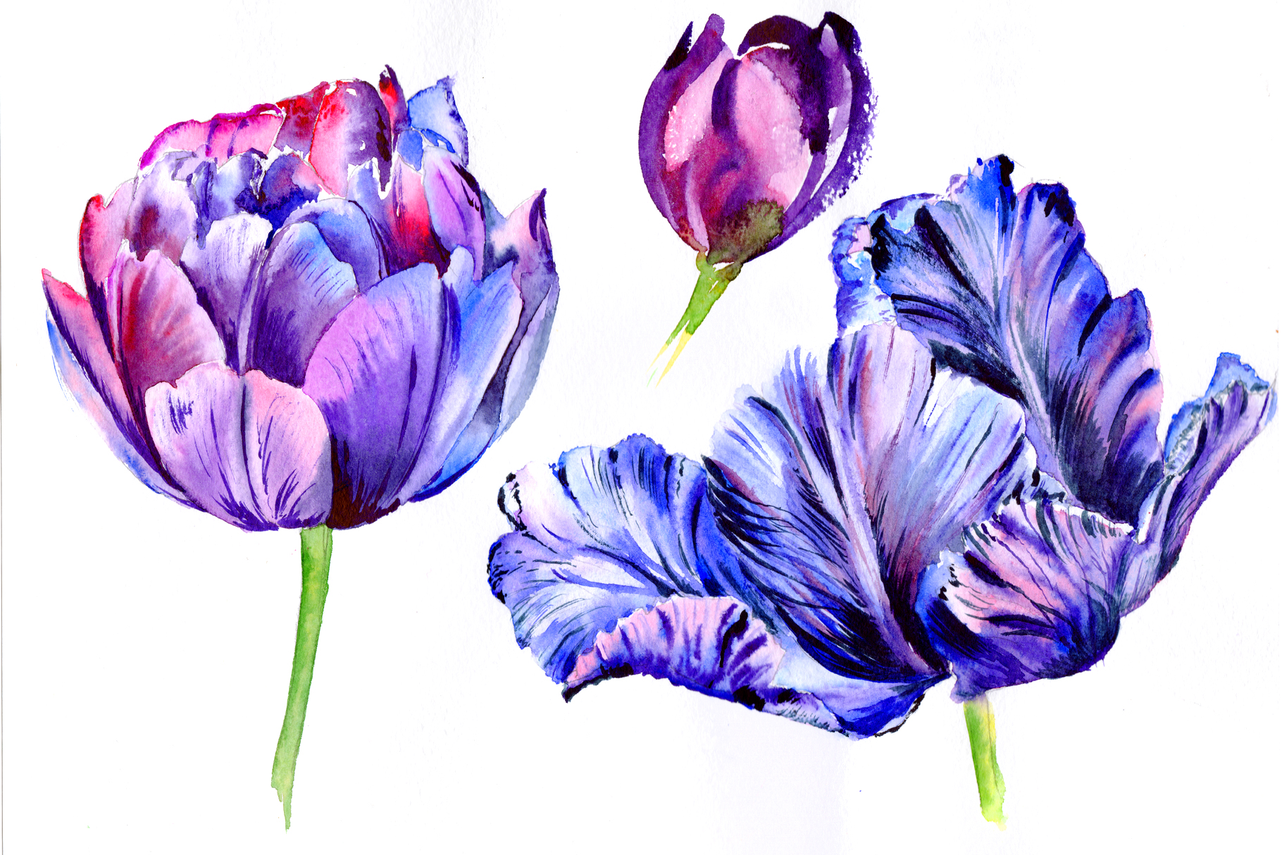 Download Free Purple Tulip Watercolor Flowers Png Graphic By Mystocks for Cricut Explore, Silhouette and other cutting machines.