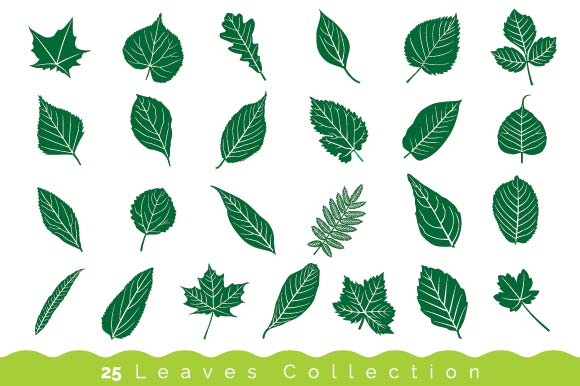 Set of 25 Leaves Illustration Graphic Objects By emnazar2009