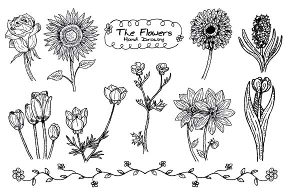 Set of Handdrawn Flowers Graphic Illustrations By emnazar2009
