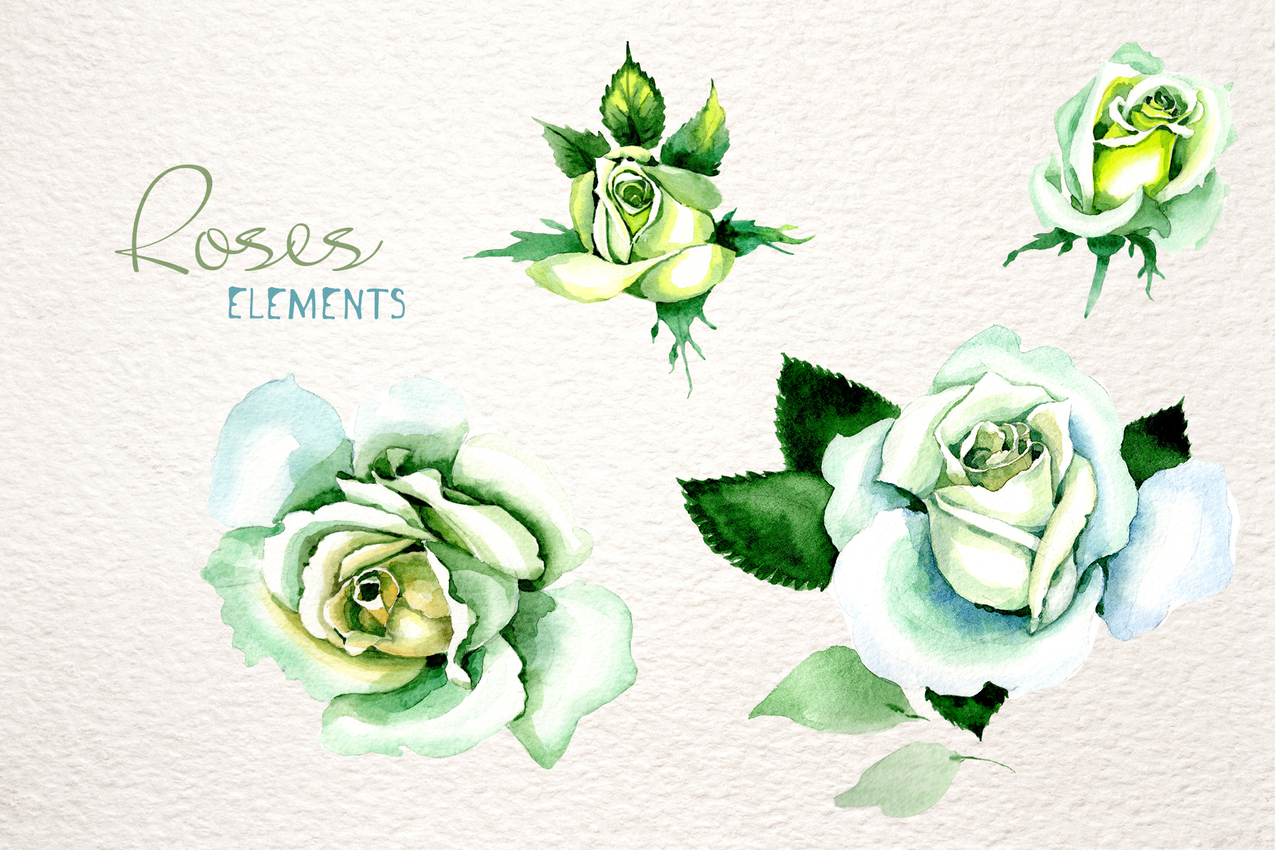 Download Free White Rose Watercolor Flower Set Grafik Von Mystocks Creative Fabrica for Cricut Explore, Silhouette and other cutting machines.