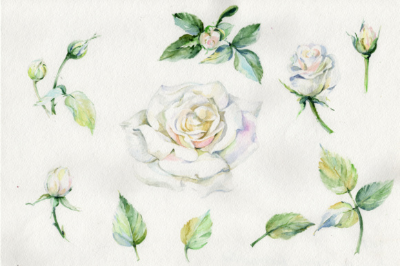 Print on Demand: White Rose Watercolor Flowers PNG Set Graphic Illustrations By MyStocks