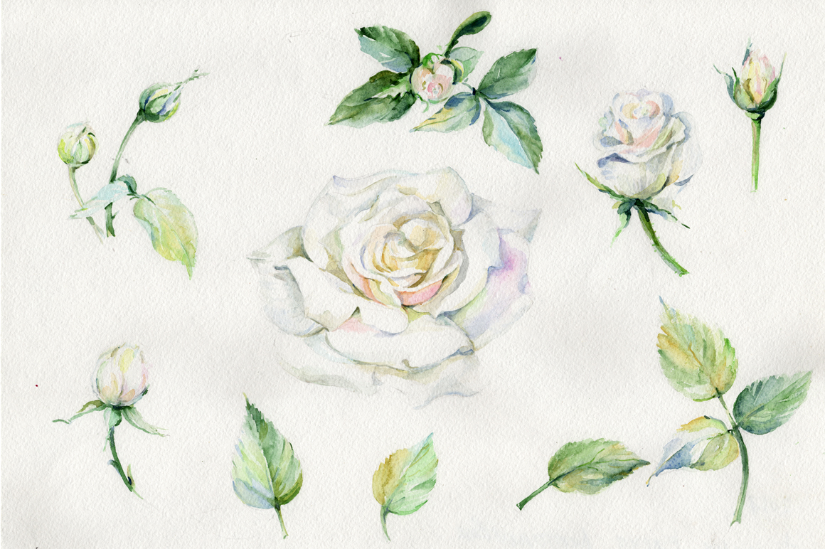 White Rose Watercolor Flowers Png Set Graphic By Mystocks Creative