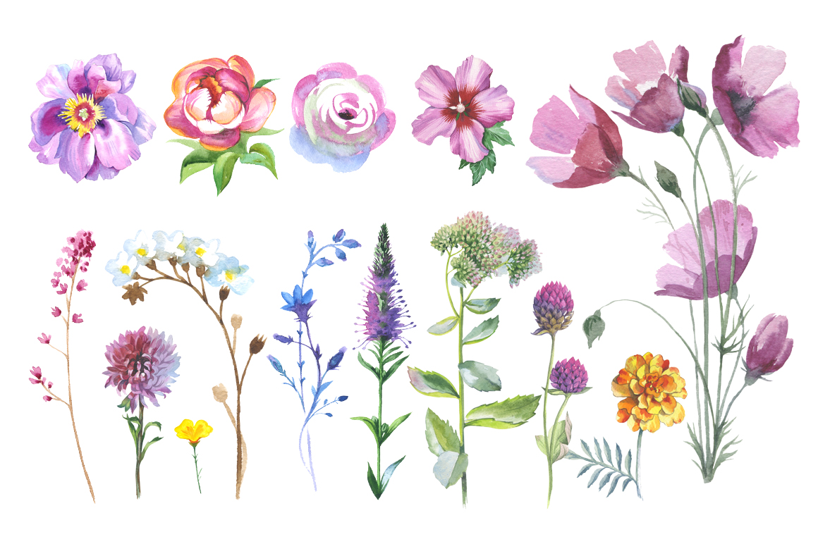 Print on Demand: Wild Flowers Watercolor PNG Clipart Graphic Illustrations By MyStocks - Image 3