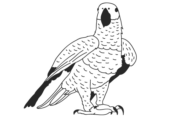 Download Free African Grey Parrot Svg Cut File By Creative Fabrica Crafts for Cricut Explore, Silhouette and other cutting machines.