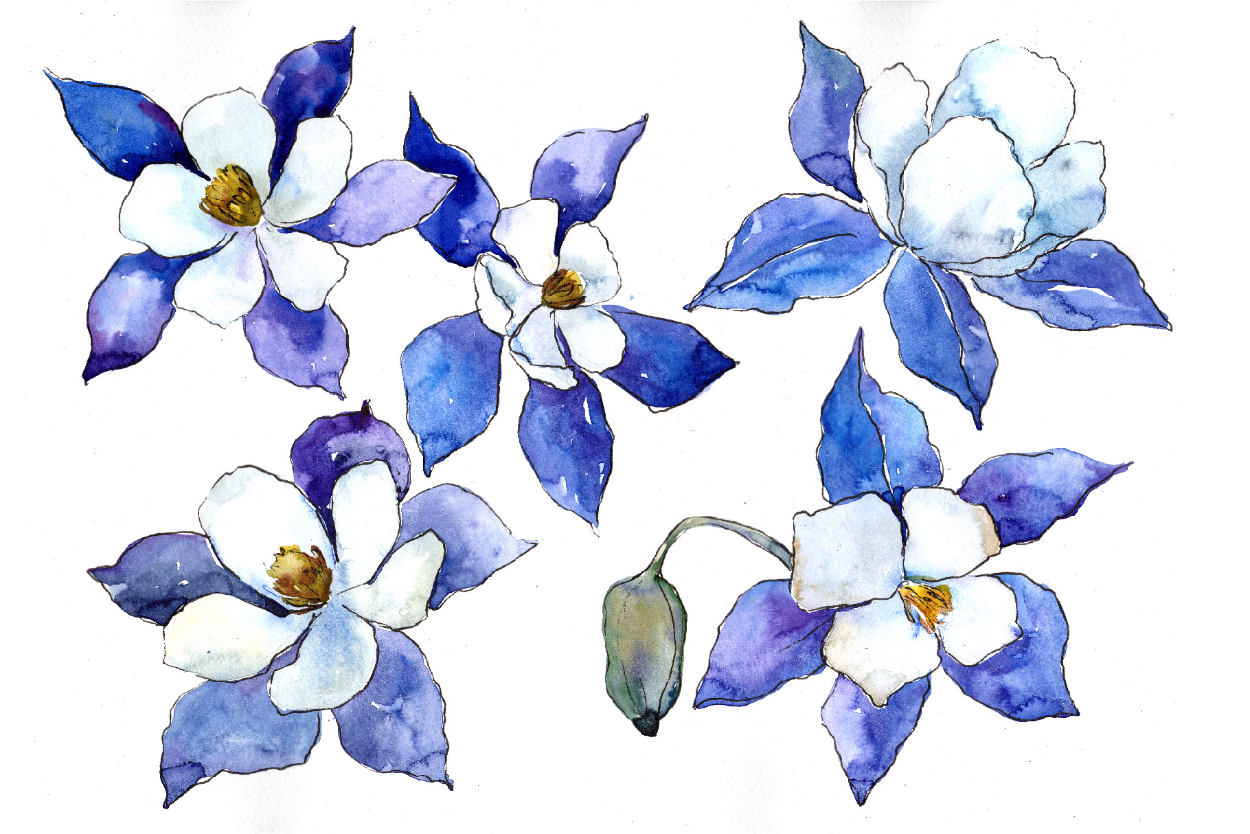 Blue Aquilegia Flower Png Watercolor Set Graphic By Mystocks