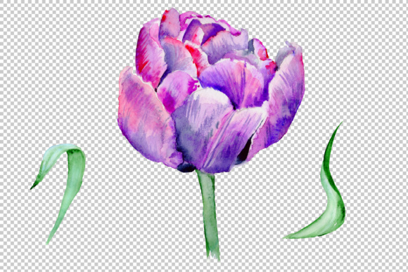 Download Free Delicate Purple Tulip Set Graphic By Mystocks Creative Fabrica for Cricut Explore, Silhouette and other cutting machines.