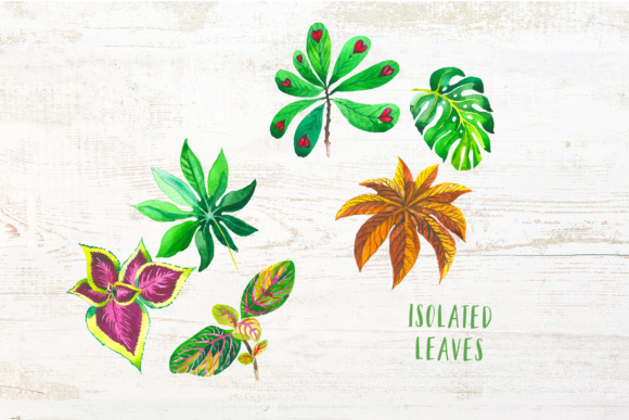 Exotic Tropical Set PNG Watercolor Graphic By MyStocks Image 8