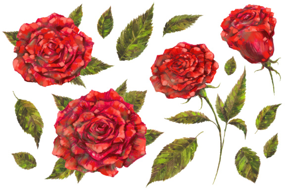 Handpainted Red Roses PNG Set Graphic Illustrations By hellokisdottir
