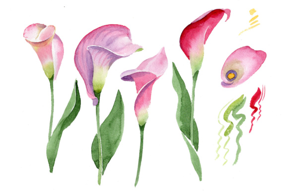 Download Free Pink Calla Flower Watercolor Set Grafik Von Mystocks SVG Cut Files