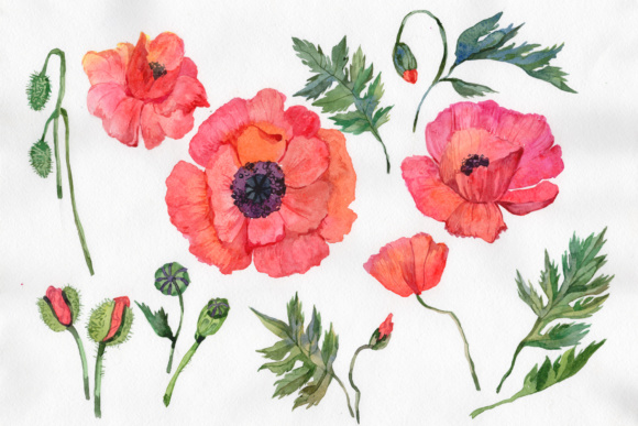 Print on Demand: Red Poppy Watercolor Flowers Graphic Illustrations By MyStocks