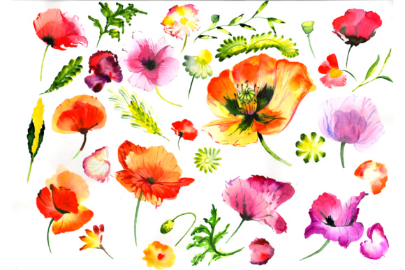 Summer Colorful Poppy Flower PNG Watercolor Set Graphic By MyStocks Image 1