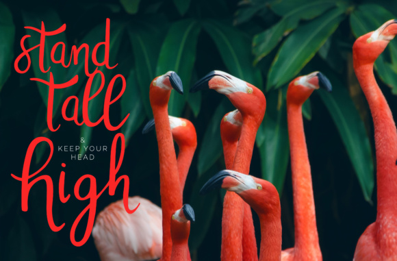 Tropicalling Font By Christine Teixeira Image 3