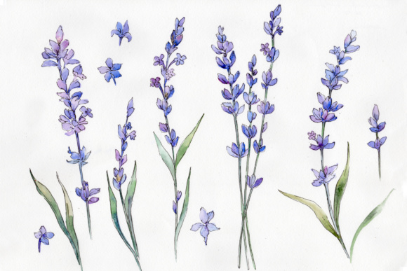 Print on Demand: Wild Field Lavender - Watercolor Set Graphic Illustrations By MyStocks