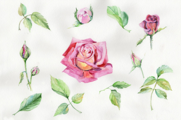 Download Free Wildflower Delicate Pink Rose Png Watercolor Set Graphic By for Cricut Explore, Silhouette and other cutting machines.