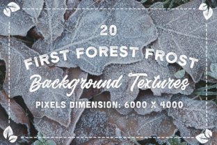 20 First Forest Frost Backgrounds Graphic Textures By Textures