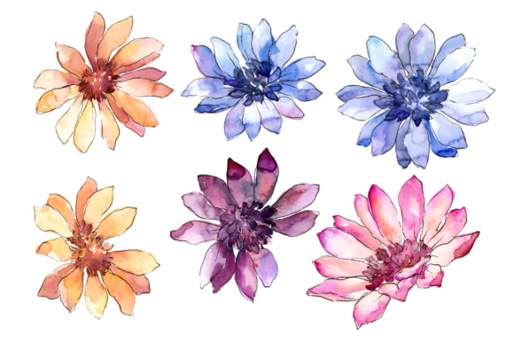 Print on Demand: Colorful African Marguerite Watercolor Set Graphic Illustrations By MyStocks