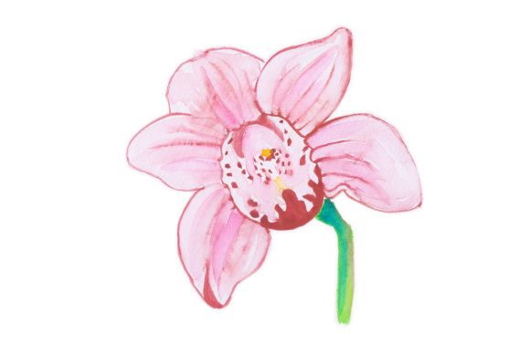 Download Free Pink Flower Svg Cut File By Creative Fabrica Crafts Creative Fabrica for Cricut Explore, Silhouette and other cutting machines.