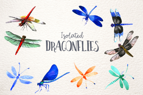 Print on Demand: Insect Dragonfly PNG Watercolor Set Graphic Illustrations By MyStocks - Image 8