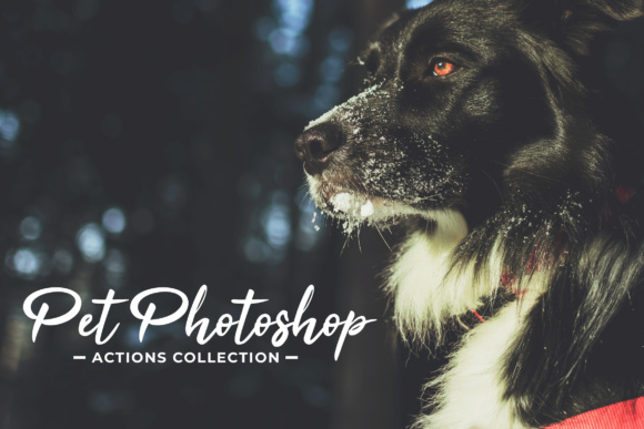 Print on Demand: Pet Photoshop Actions Collection Graphic Actions & Presets By Creative Tacos