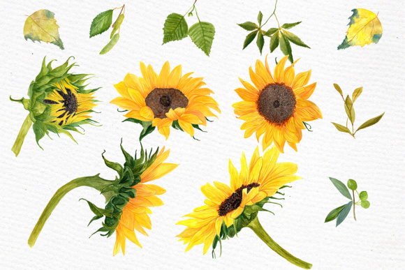 Sunflower Watercolor Clipart SUNFLOWER CLIP ART Wedding Clipart Floral Clipart Separate Flowers Diy Wedding Graphic Illustrations By LeCoqDesign - Image 3