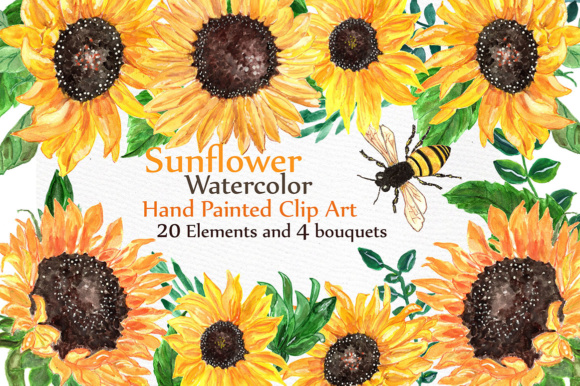 Sunflower Watercolor Clip Art Graphic Illustrations By LeCoqDesign
