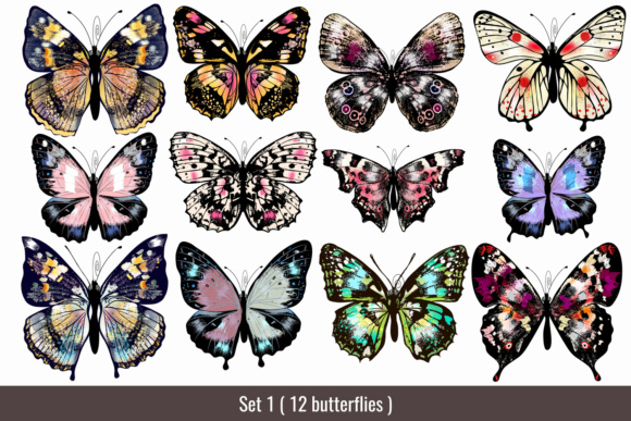 Beautiful Collection From12 High Detailed and Quality Butterflies. Graphic Download