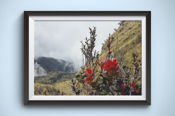 Beautiful Flowers on the Mountain Graphic Nature By Kerupukart Production