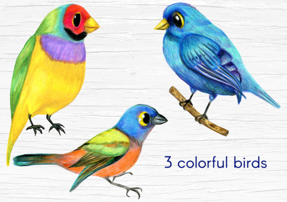 Birds and Twigs Graphic Collection