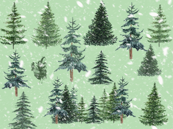 Conifers Trees Clipart Graphic Illustrations By LeCoqDesign - Image 2