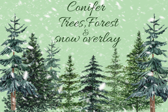 Conifers Trees Clipart Graphic Illustrations By LeCoqDesign