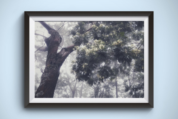 Flowering Trees with Fog Graphic Nature By Kerupukart Production