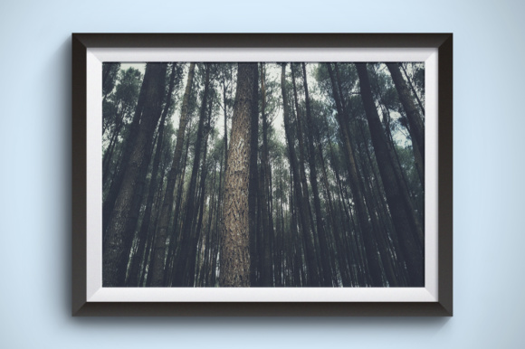 Many Tall Trees Graphic Nature By Kerupukart Production