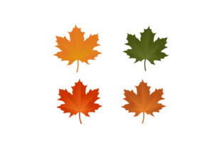 Maple Leaf, Auntum Logo Graphic By 2qnah