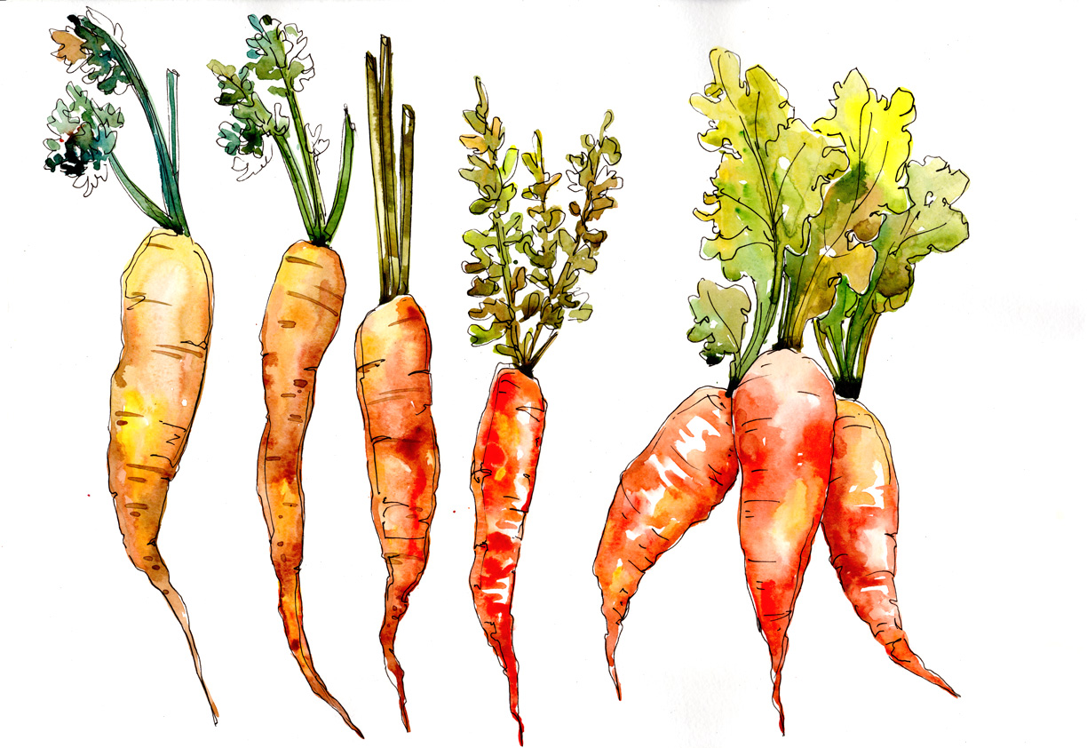 Download Free Orange Carrot Vegetables Watercolor Set Graphic By Mystocks for Cricut Explore, Silhouette and other cutting machines.