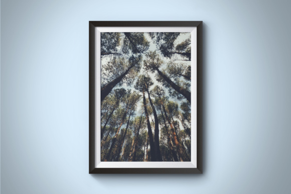 Pine Forest Photography Graphic Nature By Kerupukart Production