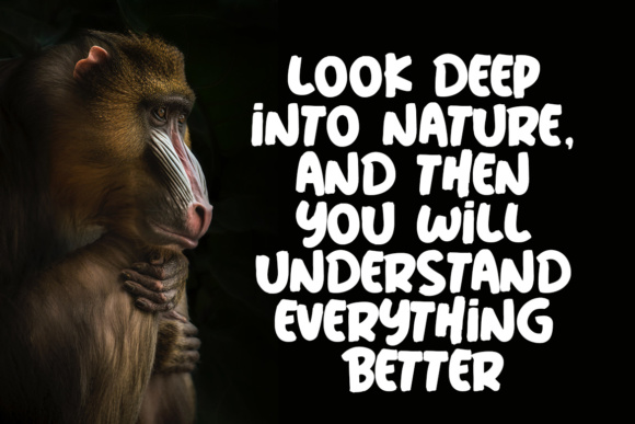 Print on Demand: Wild Nature Display Font By Lettersiro Co. - Image 3
