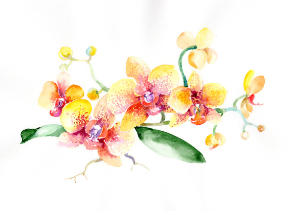 Bouquet Yellow Orchid Flower PNG Watercolor Set