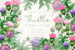 Cool Thistle PNG Watercolor Set Graphic By MyStocks