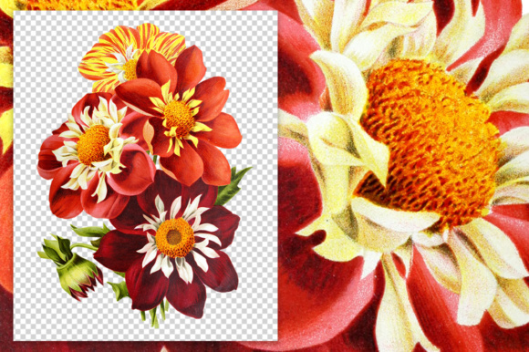 Dahlias Watercolor Graphic Illustrations By Enliven Designs - Image 5