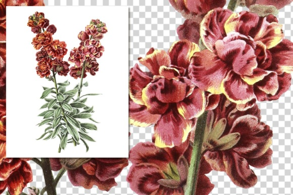 Double Wallflower Clover Watercolor Graphic Illustrations By Enliven Designs - Image 3