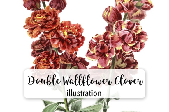 Double Wallflower Clover Watercolor Graphic Illustrations By Enliven Designs - Image 1