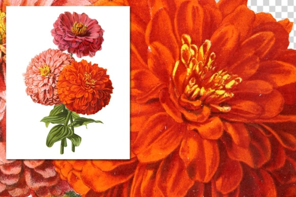 Double Zinnia Bouquet Watercolor Graphic Illustrations By Enliven Designs - Image 3
