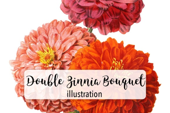 Double Zinnia Bouquet Watercolor Graphic Illustrations By Enliven Designs