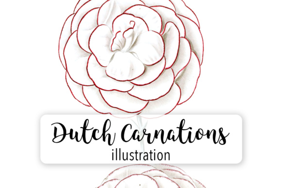 Dutch Carnation Watercolor Graphic Illustrations By Enliven Designs