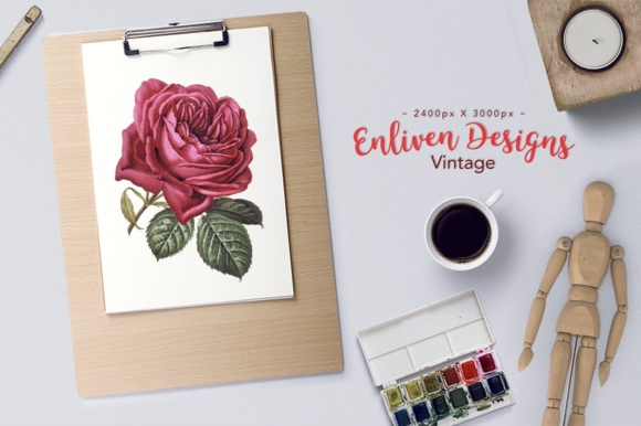 French Rose Watercolor Graphic Illustrations By Enliven Designs - Image 2