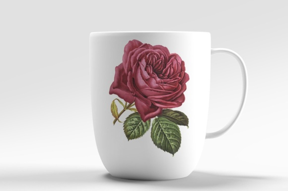 French Rose Watercolor Graphic Illustrations By Enliven Designs - Image 5