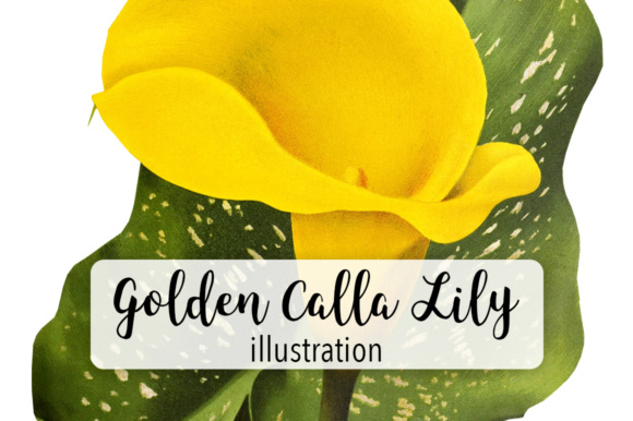 Golden Calla Lily Graphic By Enliven Designs